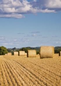 Calamités agricoles, sécheresse 2020 sur prairies
