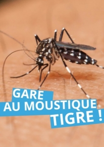 Attention au moustique-tigre !