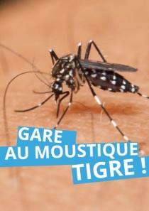 Attention au moustique-tigre !