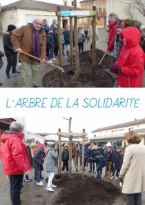 La plantation du 16ème arbre de la Solidarité